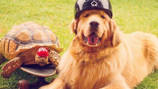 Una tortuga rescatada y un perro se convierten en los mejores amigos