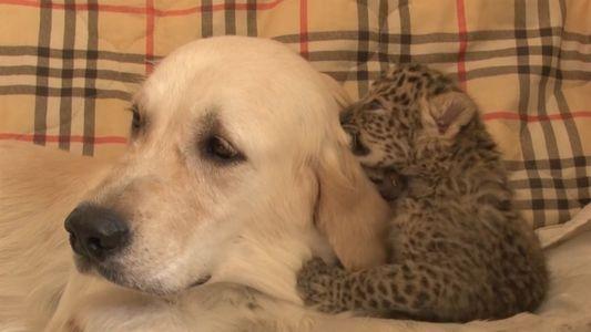 Perra salva a un cachorro de leopardo del Amur, el felino más raro del mundo
