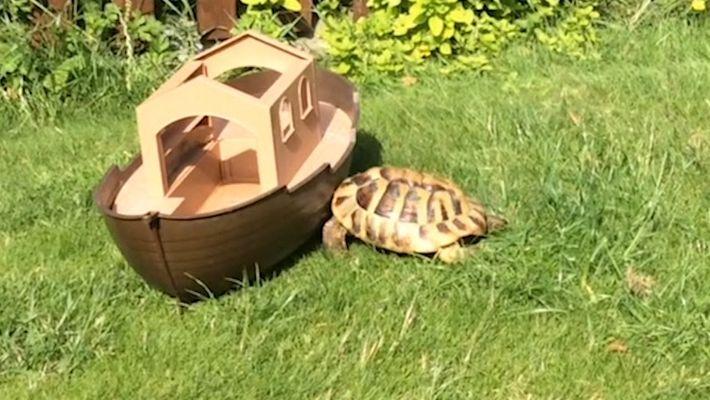 ¿Por qué Timmy, la tortuga, ataca todo lo que tiene a la vista?