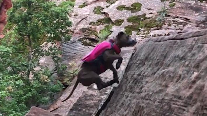 Esta perra rescatada es muy buena trepando montañas