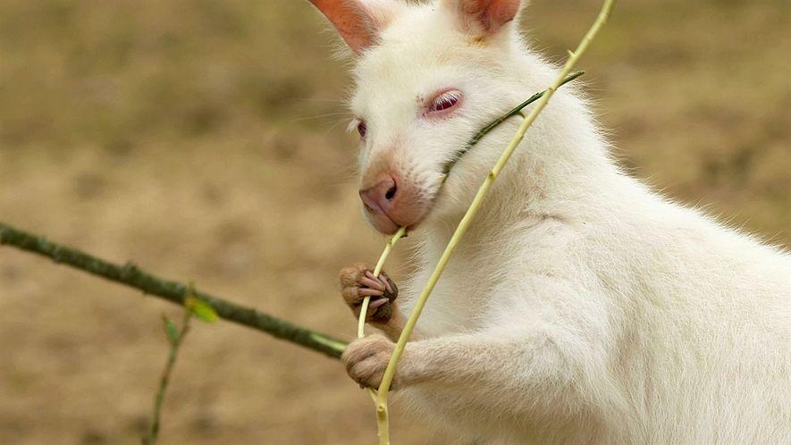 Increíbles animales blancos que parecen salir de un cuento