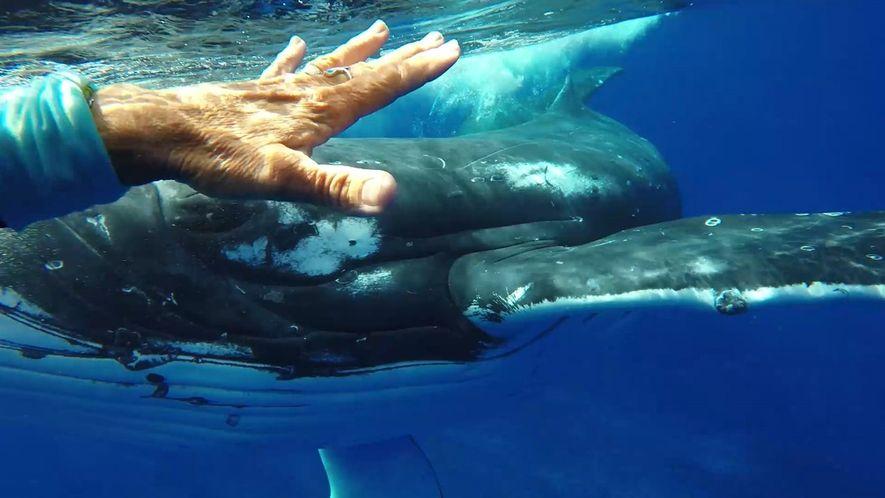 ¿Estaba esta ballena intentando salvar la vida de una buceadora?