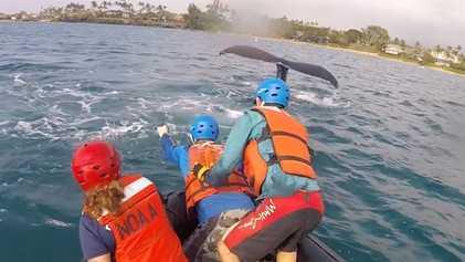 Rescatistas liberan ballenas jorobadas atrapadas en redes de pesca en Hawái