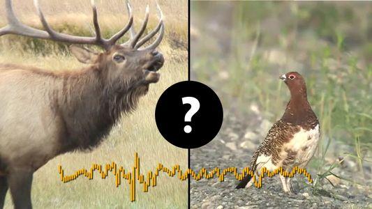 Nunca adivinarás qué animales hacen estos sonidos