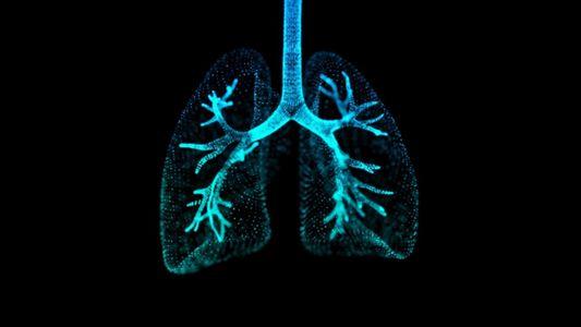 Los pulmones: dos de los órganos más importantes del cuerpo
