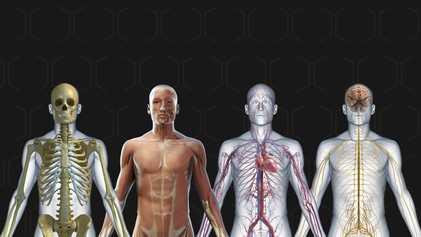 ¿Cómo funciona el cuerpo humano?