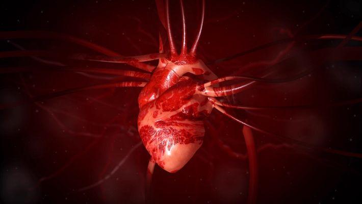 ¿Cómo funciona el corazón?