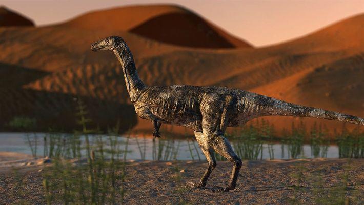 El pie de dinosaurio recién descubierto es el fósil de terópodos mejor conservado en Brasil