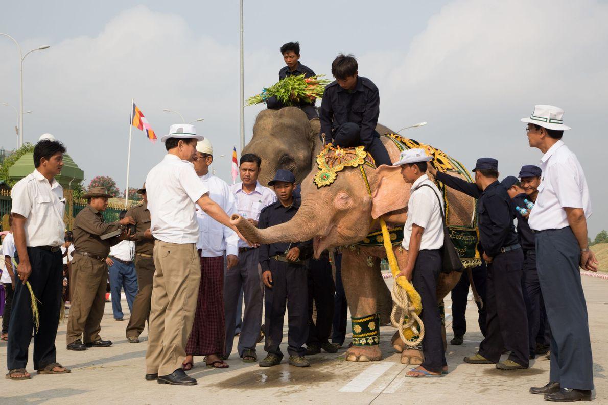 El noveno elefante blanco se exhibe alrededor de una pagoda en Naypyitaw.