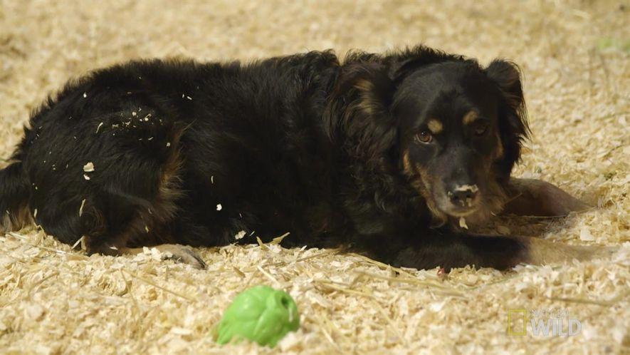 Amistades Insólitas: El mejor niñero canino