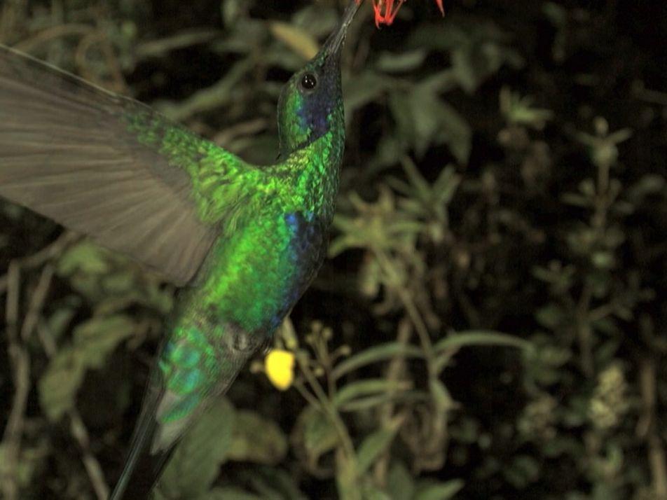 Wild Perú: Conoce los diversos ecosistemas del Perú