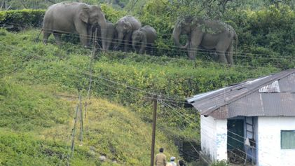 Los mensajes de texto ayudan a que elefantes y personas puedan convivir