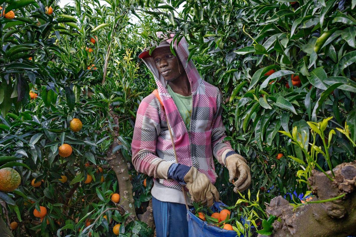 Mbaye Tune llegó en 2016 desde Senegal a la zona agrícola del sur de España y ...