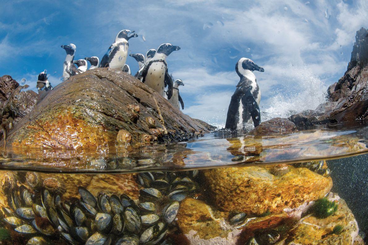 Costa de los Esquletos, Namibia