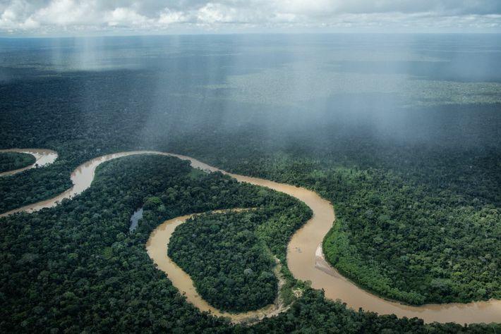 En la región de las cabeceras del río Curanja cerca del Parque Nacional Alto Purús y ...
