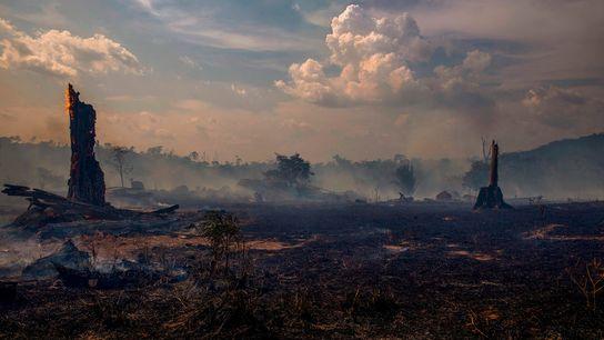 Un área de bosque quemada en el estado de Pará, Brasil, en la cuenca de la ...