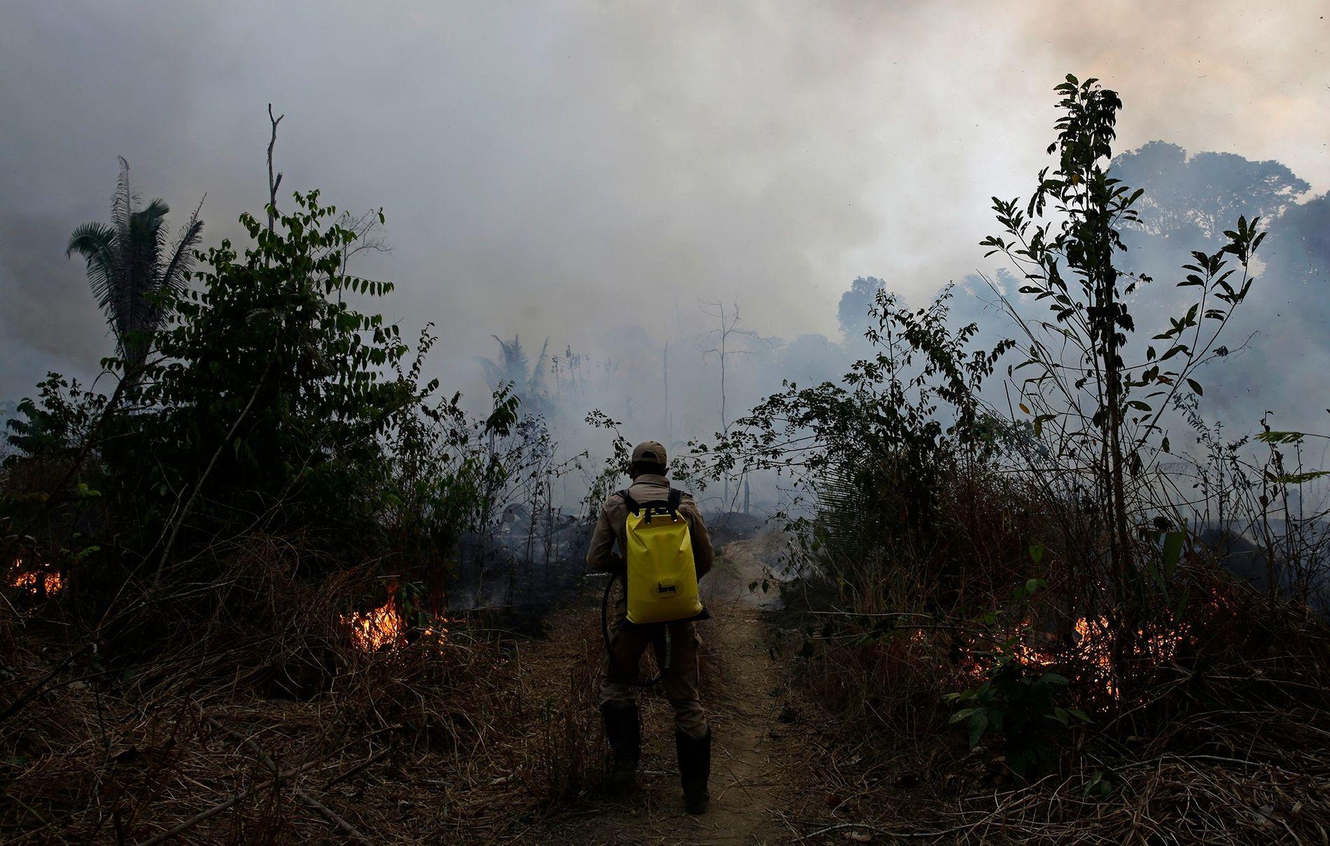 Un bombero trabaja para apagar las llamas a lo largo de un camino en el Bosque ...