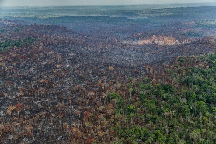 Algunos en Arariboia, Maranhão, fueron provocados deliberadamente por leñadores y ganaderos que buscaban hacer espacio para ...