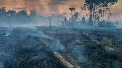 Amazonía en llamas: cuál es la responsabilidad y la realidad de los ganaderos