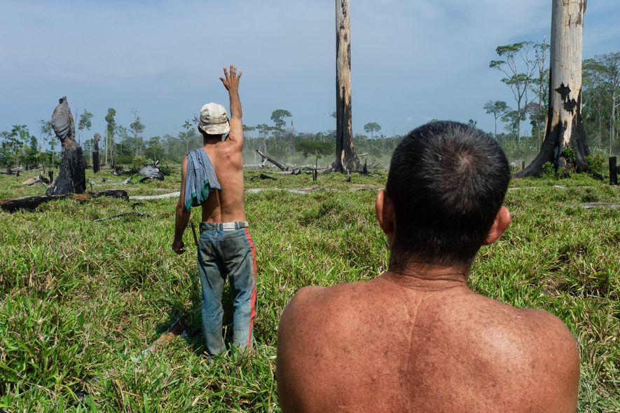 Los ganaderos del oeste de la Amazonía brasileña, en la frontera entre los estados de Acre ...