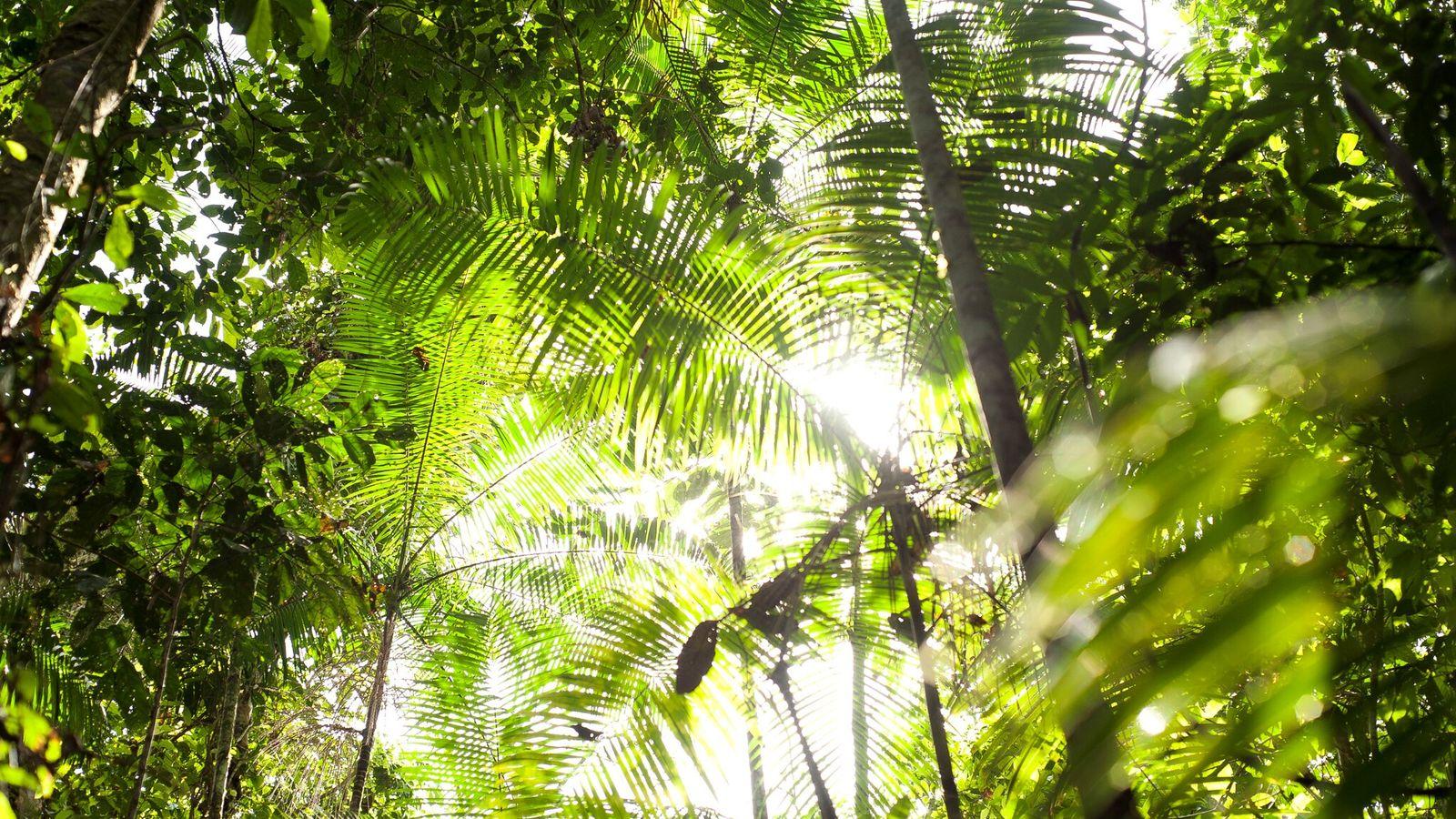 Un futuro más cálido para los bosques como el Amazonas, que se muestra aquí, no significa ...