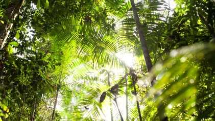 Algunos bosques tropicales revelan una resistencia extraordinaria ante el aumento de las temperaturas