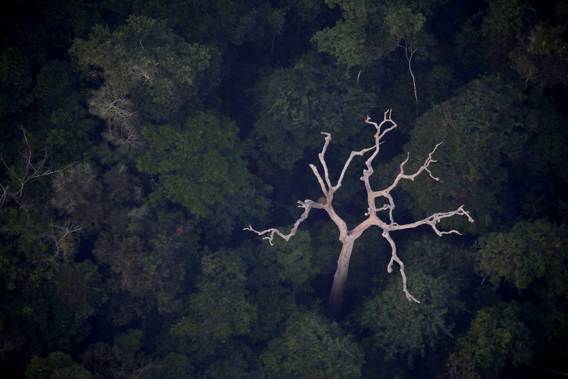 Vista aérea de la Amazonía cerca de Porto Velho, en el estado de Rondonia, Brasil, el 21 de agosto de 2019.