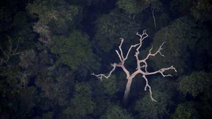 ¿La Amazonía produce realmente el 20% del oxígeno del planeta?