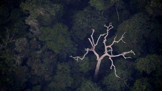 Vista aérea de la Amazonía cerca de Porto Velho, en el estado de Rondonia, Brasil, el ...