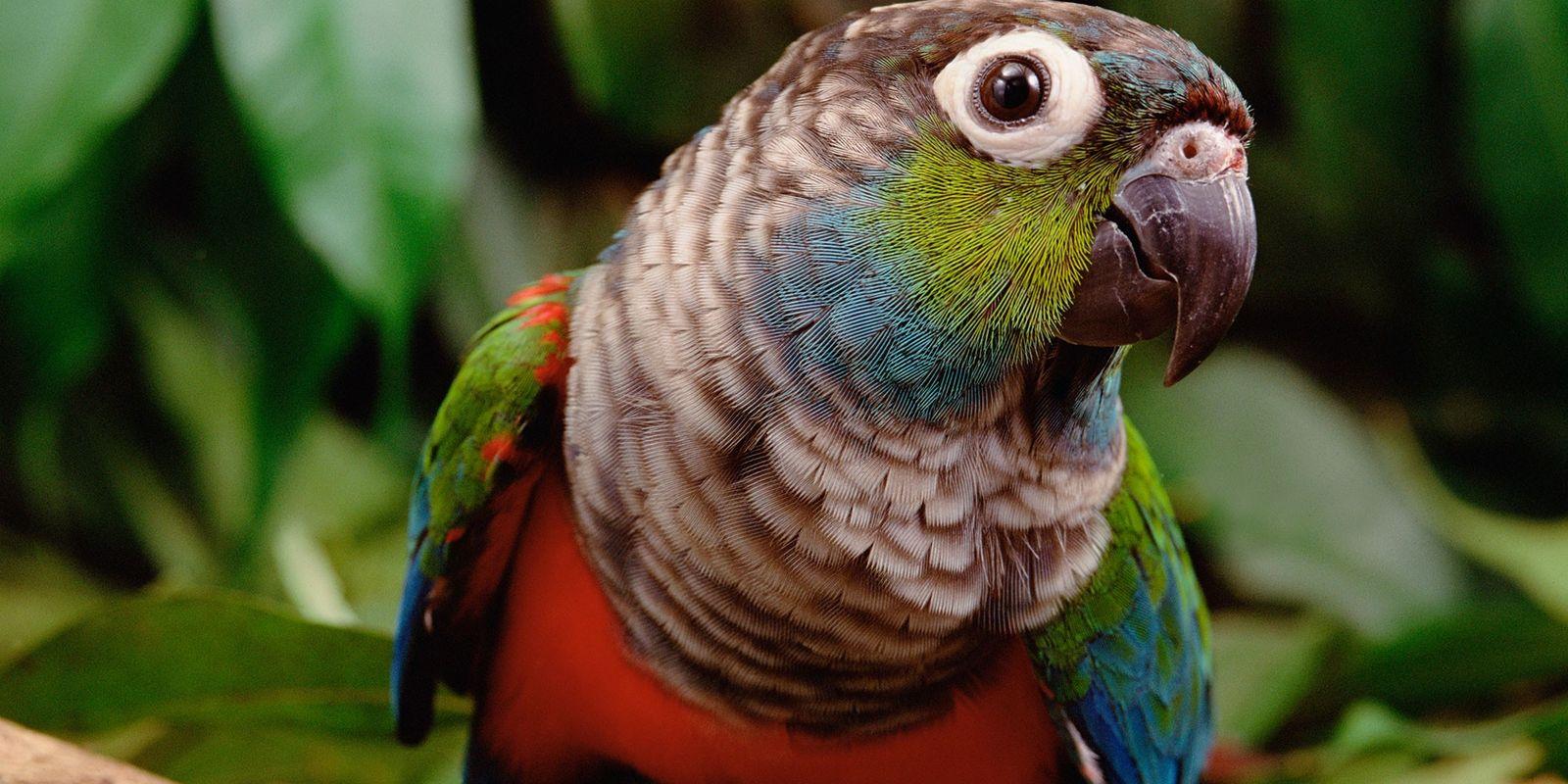 National Geographic Society presenta material educativo sobre la Amazonía para aprender en casa