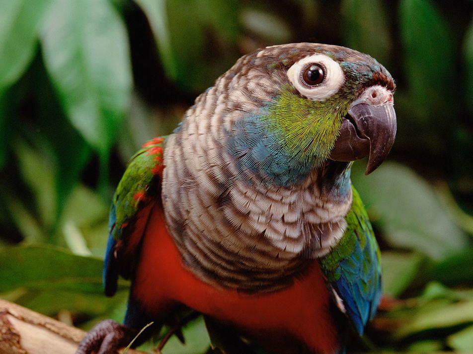 Amazonía en llamas: ¿cómo afectan los incendios a la vida silvestre?
