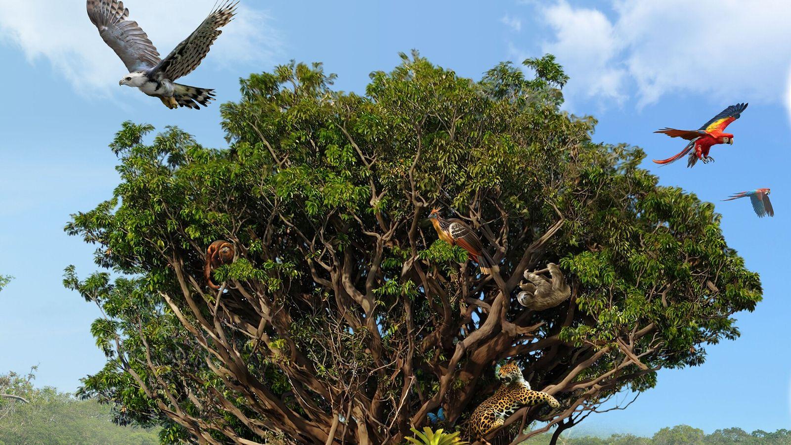 Amazonia Igapo