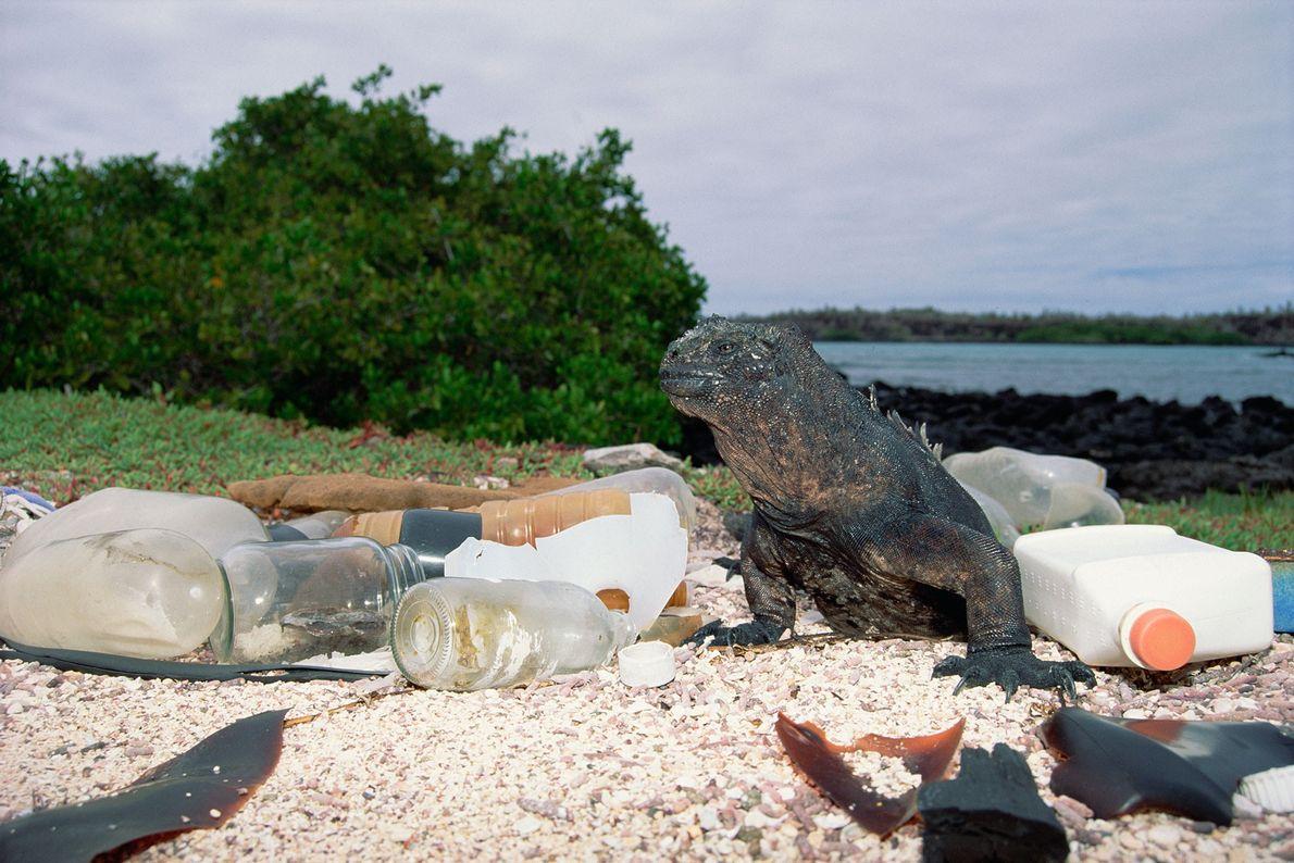 Envases de plástico y vidrio vacíos van a parar a la costa y contaminan el hábitat ...