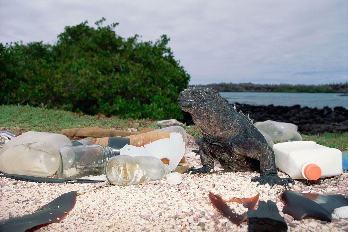 Envases de plástico y vidrio vacíos van a parar a la costa y contaminan el hábitat …