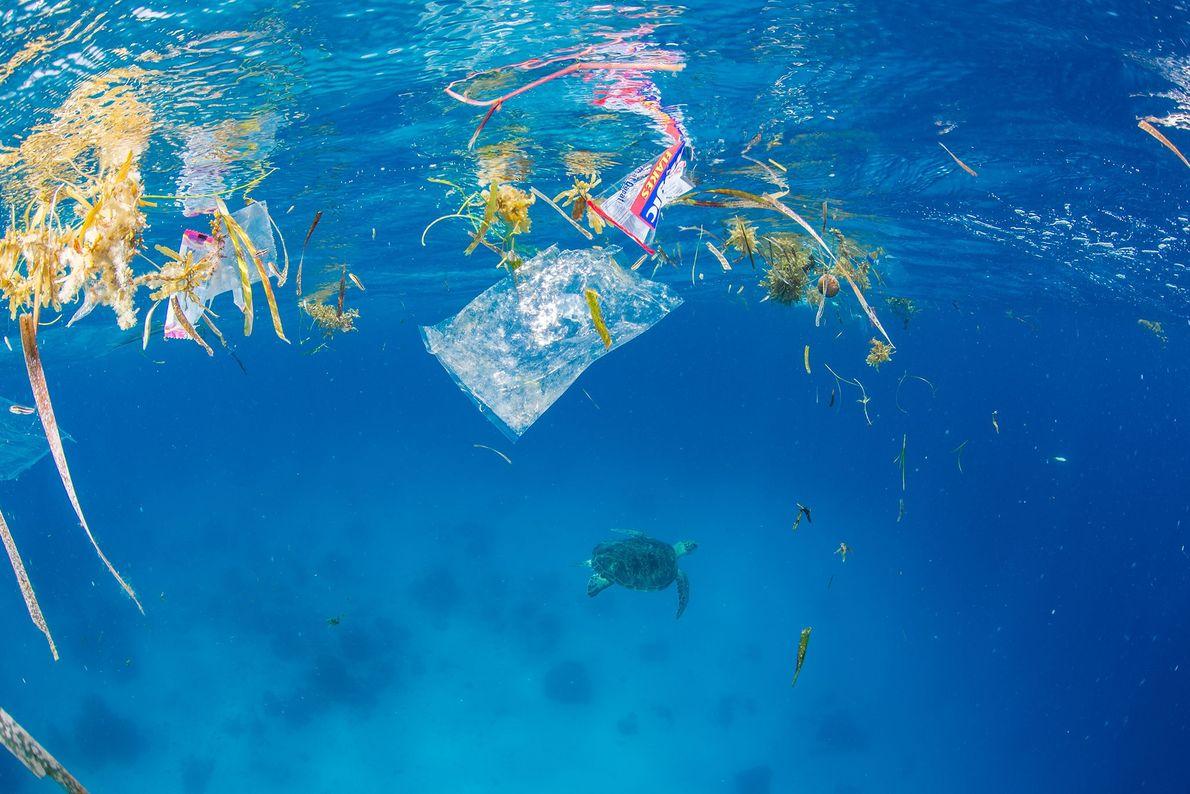 En la superficie del agua, la flora marina se mezcla con los envoltorios plásticos. Debajo, una ...
