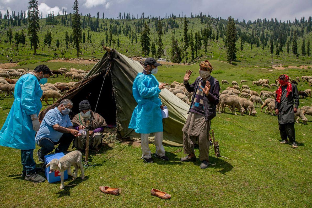 Los trabajadores de la salud hablan con los nómadas de Cachemira durante una campaña de vacunación ...