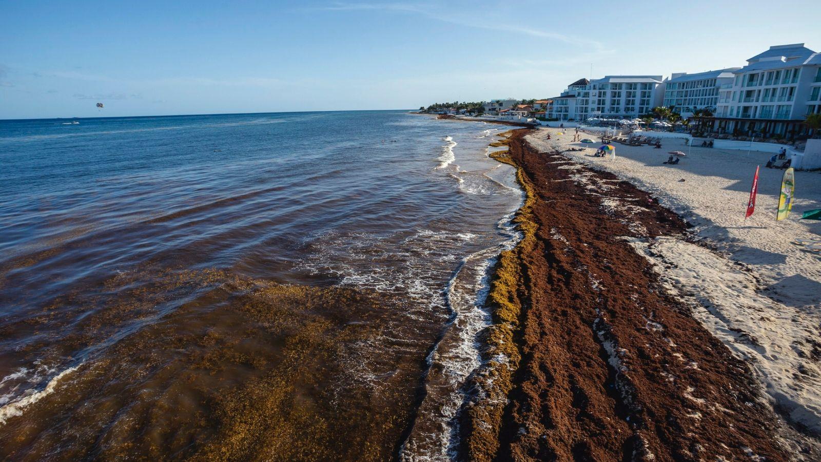 Sargassum Contaminates The Beaches Of The Mexican Caribbean