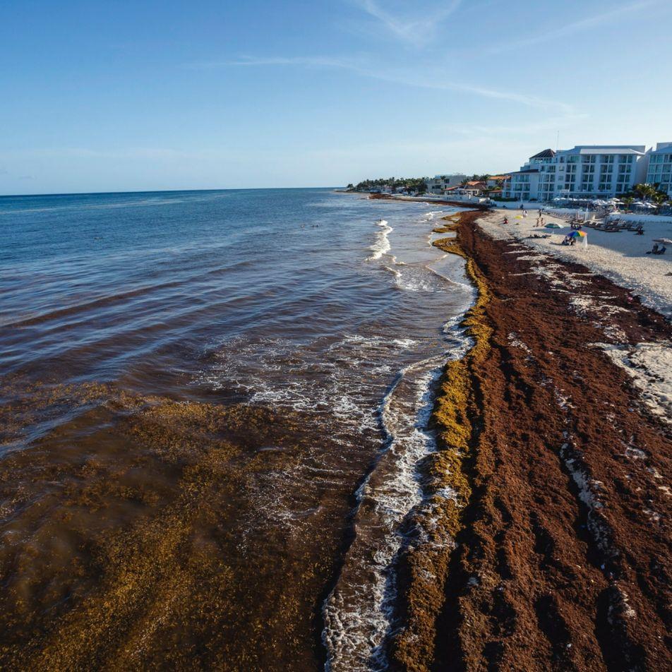 México: ¿Podrá la ciencia resolver el problema de las algas en las playas del Caribe?