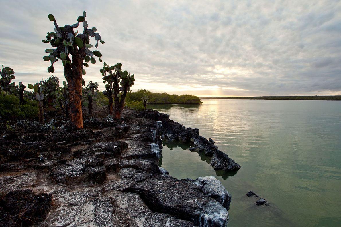 Bahía Tortuga, Isla de Santa Cruz, Islas Galápagos, Ecuador