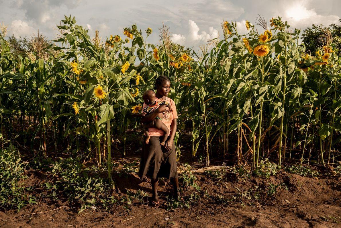 Susan Meneno sostiene a su hija de un año frente al campo de girasoles de su ...