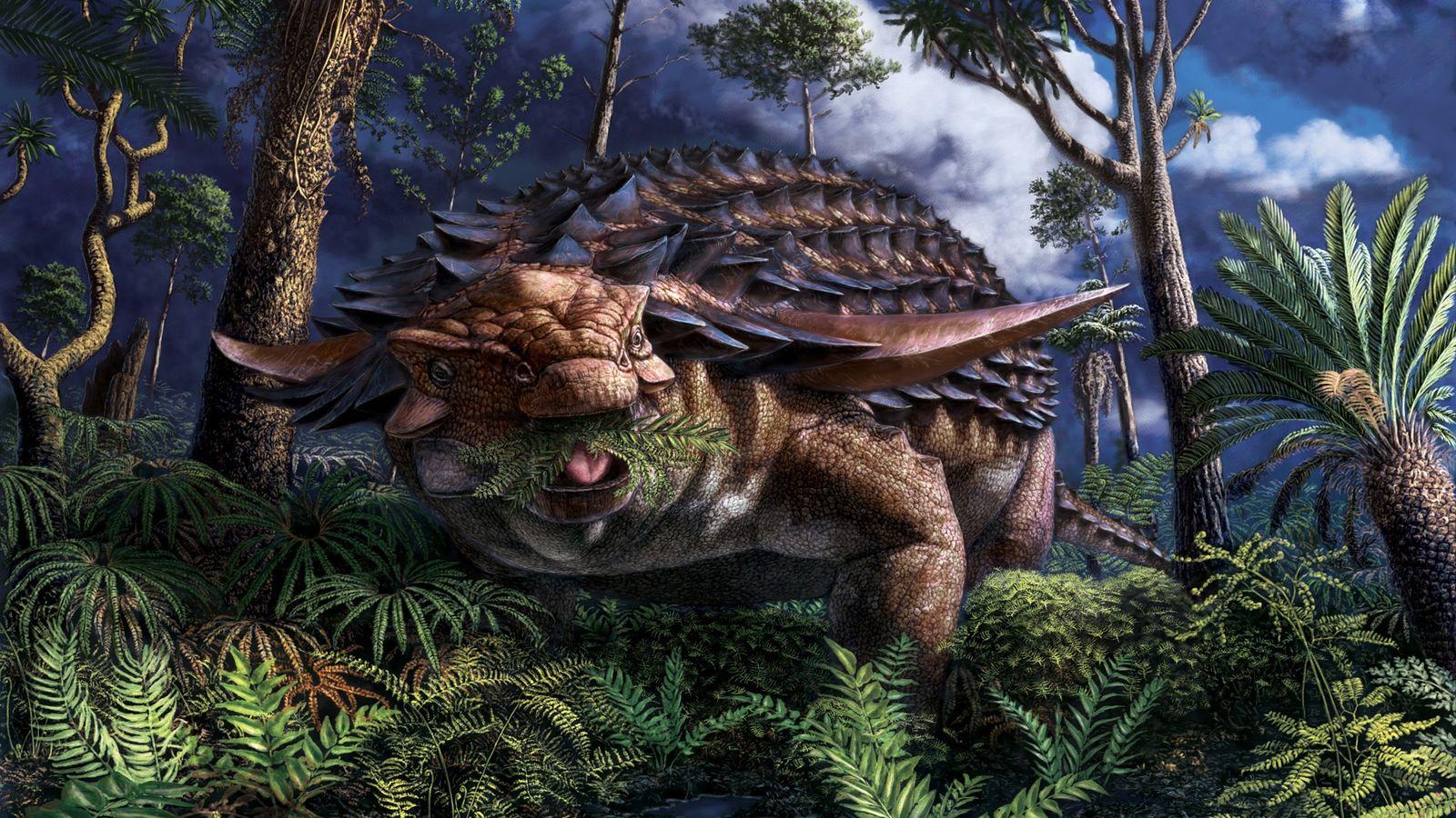 Hace unos 110 millones de años, en el actual noroeste de Alberta, el nodosaurioBorealopelta markmitchellicomió helechos ...