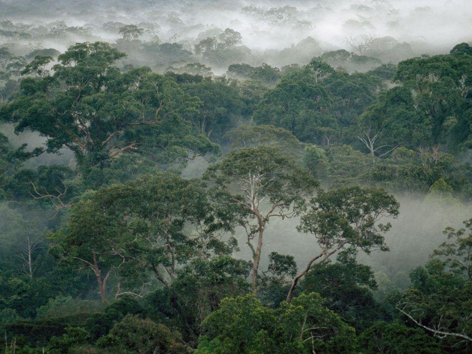 Cómo las termitas ayudan a las selvas a sobrevivir al cambio climático