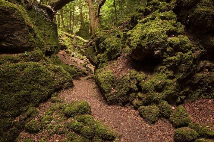 Puzzlewood, en el Bosque de Dean, Gloucestershire, fue la ubicación elegida para una escena de lucha en El ...
