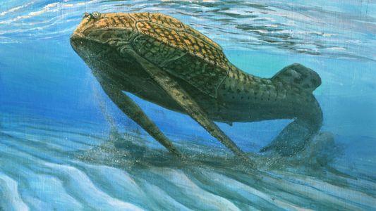 """Nuevo estudio plantea que los huesos evolucionaron para actuar como """"baterías esqueléticas"""" en peces prehistóricos"""