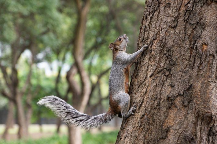 En el mundo, se conocen más de 300 especies de ardillas. Algunos de ellas, entre las cuales ...