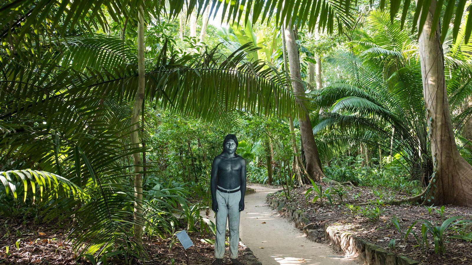 A lo largo de un sendero del Museo Paraense Emílio Goeldi, en Belém, se encuentra una ...