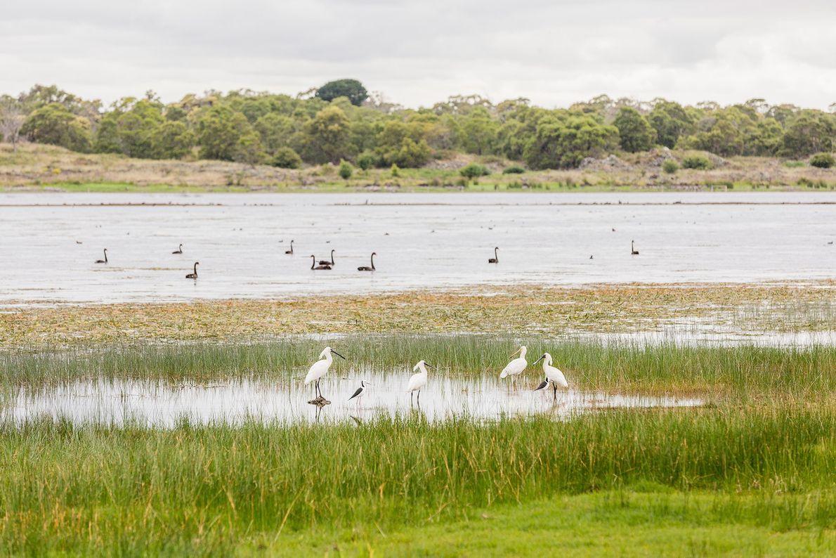 Budj Bim Cultural Landscape, Australia
