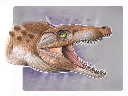 """Chile: encuentran restos fósiles de un """"abuelo"""" de los cocodrilos modernos"""