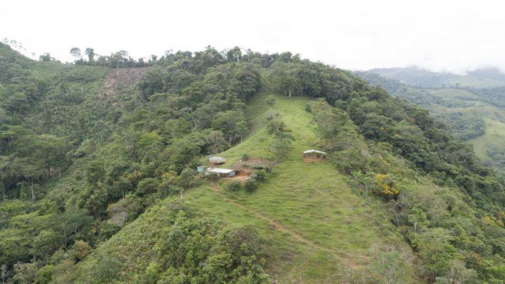 Se considera que la región de Caquetá en Colombia es el portal al Amazonas. Sus condiciones ...