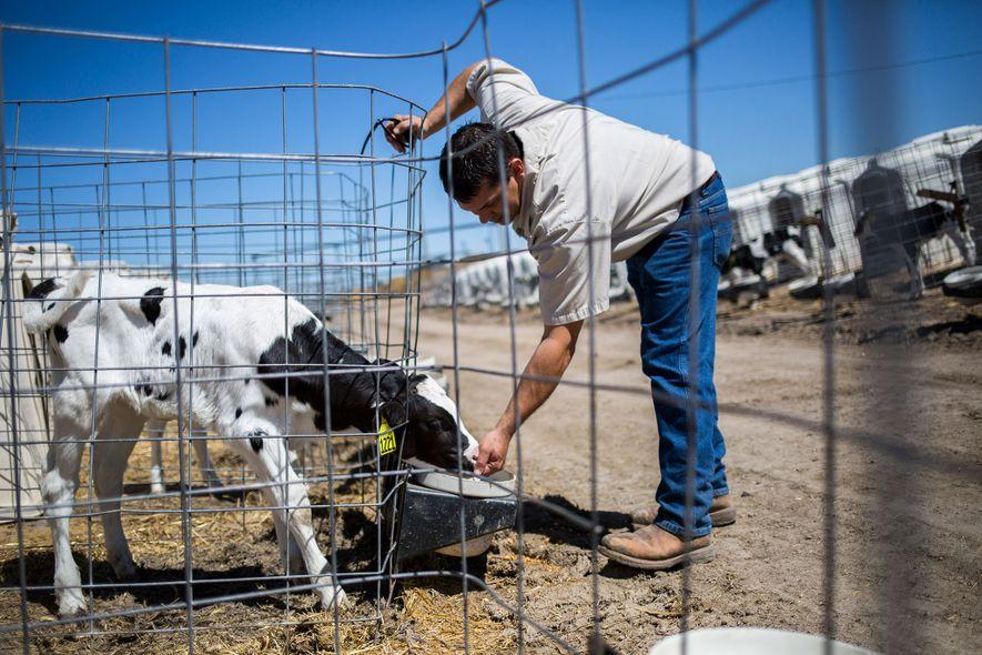 Clay McCarty es uno de los cuatro hermanos encargados de McCarty Family Farms, empresa que llegó ...